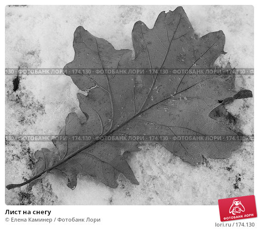 Купить «Лист на снегу», фото № 174130, снято 21 апреля 2018 г. (c) Елена Каминер / Фотобанк Лори