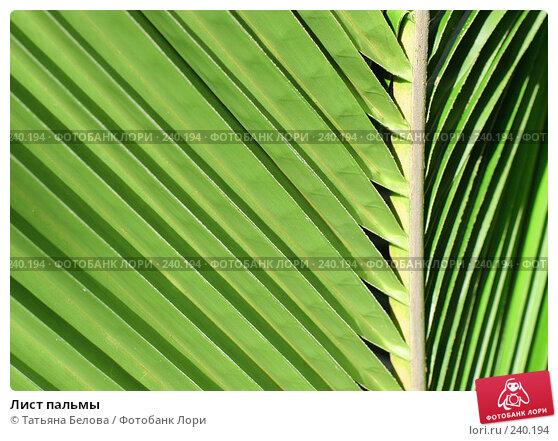Лист пальмы, эксклюзивное фото № 240194, снято 18 марта 2008 г. (c) Татьяна Белова / Фотобанк Лори