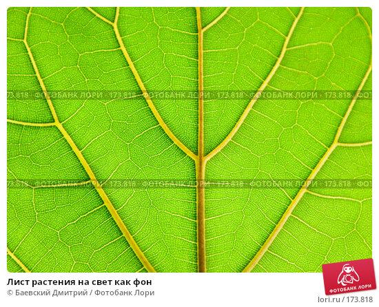 Лист растения на свет как фон, фото № 173818, снято 12 января 2008 г. (c) Баевский Дмитрий / Фотобанк Лори