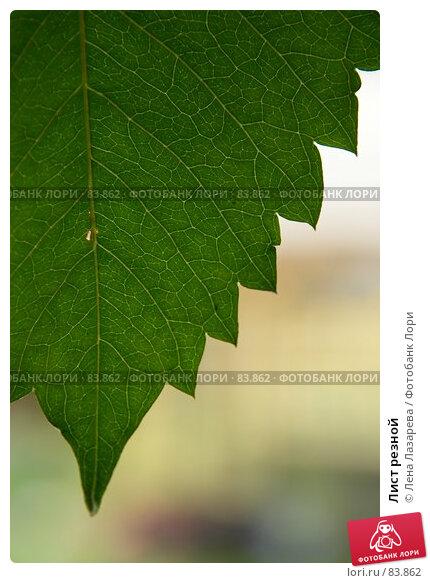 Лист резной, фото № 83862, снято 31 августа 2007 г. (c) Лена Лазарева / Фотобанк Лори