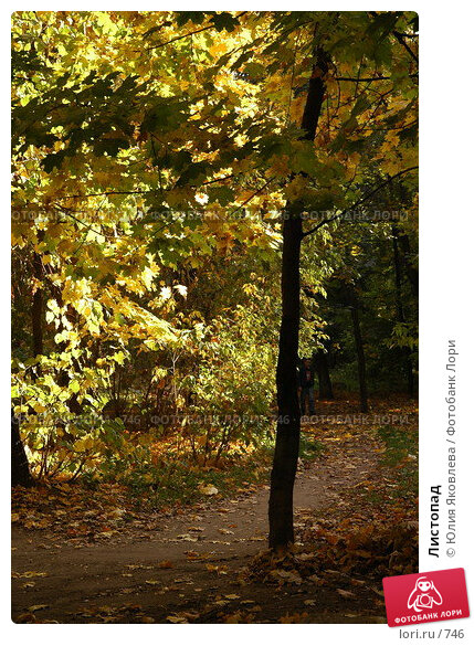 Купить «Листопад», фото № 746, снято 1 октября 2005 г. (c) Юлия Яковлева / Фотобанк Лори