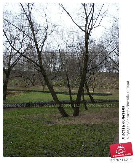 Купить «Листва облетела», фото № 14214, снято 30 ноября 2006 г. (c) Удодов Алексей / Фотобанк Лори