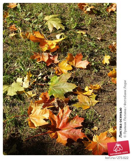 Листва осенью, фото № 273022, снято 24 сентября 2006 г. (c) Примак Полина / Фотобанк Лори