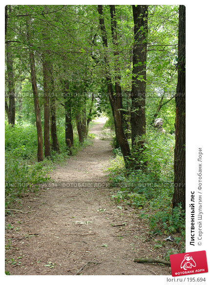 Купить «Лиственный лес», фото № 195694, снято 9 июля 2007 г. (c) Сергей Шульгин / Фотобанк Лори