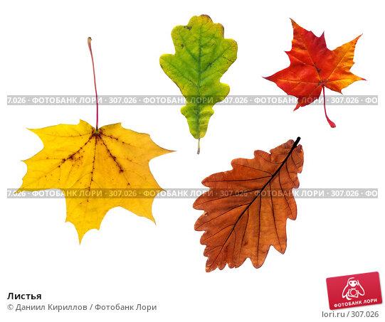 Листья, фото № 307026, снято 23 октября 2016 г. (c) Даниил Кириллов / Фотобанк Лори