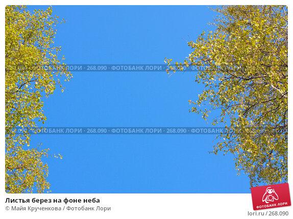 Листья берез на фоне неба, фото № 268090, снято 27 апреля 2008 г. (c) Майя Крученкова / Фотобанк Лори