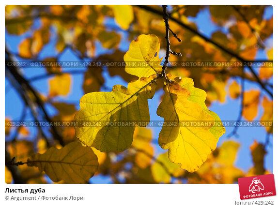 Листья дуба, фото № 429242, снято 20 октября 2007 г. (c) Argument / Фотобанк Лори