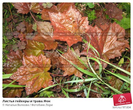 Листья гейхеры и трава.Фон, фото № 97834, снято 19 августа 2006 г. (c) Наталья Волкова / Фотобанк Лори