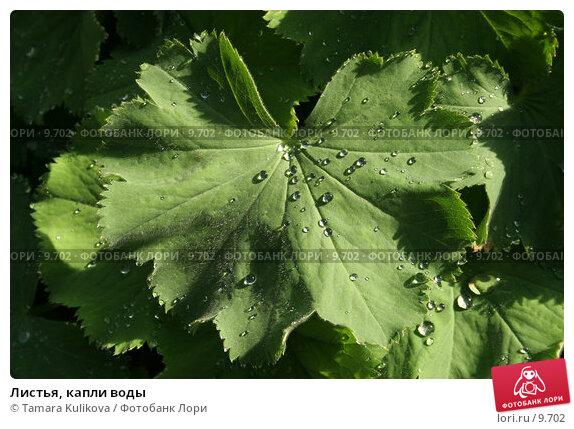 Листья, капли воды, фото № 9702, снято 23 сентября 2006 г. (c) Tamara Kulikova / Фотобанк Лори