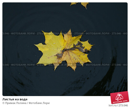 Листья на воде, фото № 273046, снято 14 октября 2006 г. (c) Примак Полина / Фотобанк Лори