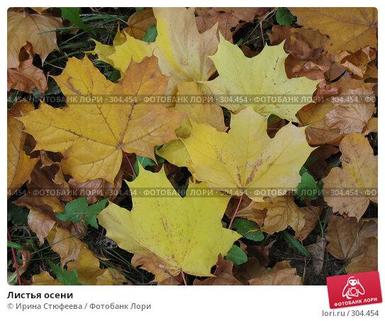 Листья осени, фото № 304454, снято 3 октября 2007 г. (c) Ирина Стюфеева / Фотобанк Лори