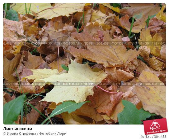 Листья осени, фото № 304458, снято 3 октября 2007 г. (c) Ирина Стюфеева / Фотобанк Лори