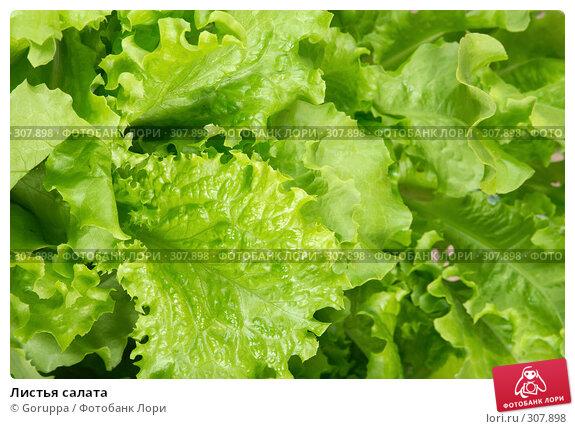 Листья салата, фото № 307898, снято 31 мая 2008 г. (c) Goruppa / Фотобанк Лори