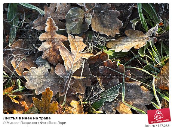 Листья в инее на траве, фото № 127238, снято 10 декабря 2005 г. (c) Михаил Лавренов / Фотобанк Лори