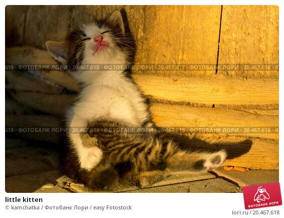 How do you litter train a cat