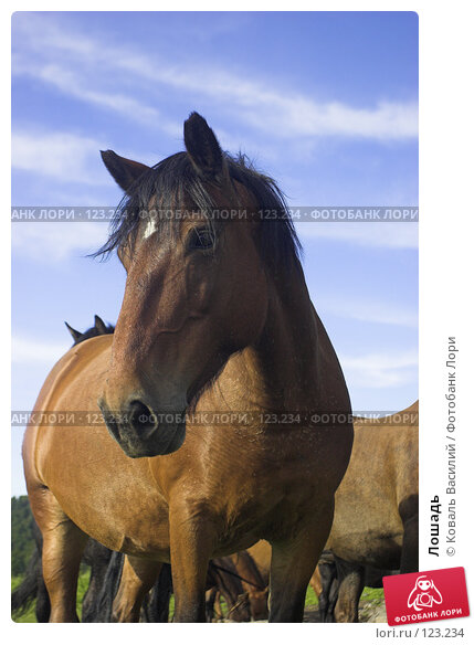 Лошадь, фото № 123234, снято 29 мая 2017 г. (c) Коваль Василий / Фотобанк Лори