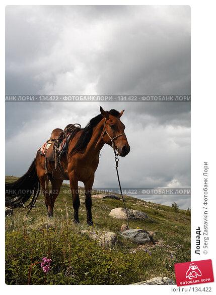 Лошадь, фото № 134422, снято 30 июня 2006 г. (c) Serg Zastavkin / Фотобанк Лори