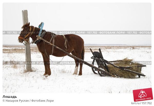 Лошадь, фото № 157702, снято 17 декабря 2007 г. (c) Насыров Руслан / Фотобанк Лори