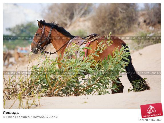 Лошадь, фото № 167362, снято 3 августа 2007 г. (c) Олег Селезнев / Фотобанк Лори