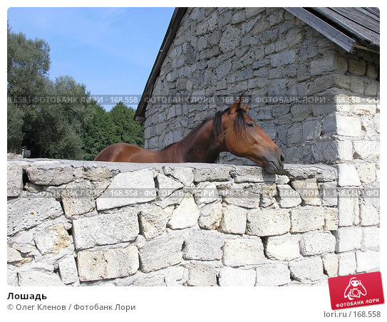 Лошадь, фото № 168558, снято 10 сентября 2005 г. (c) Олег Кленов / Фотобанк Лори