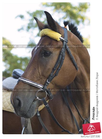 Лошадь, фото № 237530, снято 23 апреля 2017 г. (c) Андрей Андреев / Фотобанк Лори