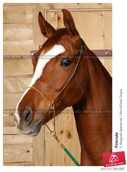 Купить «Лошадь», фото № 285082, снято 24 марта 2006 г. (c) Андрей Армягов / Фотобанк Лори