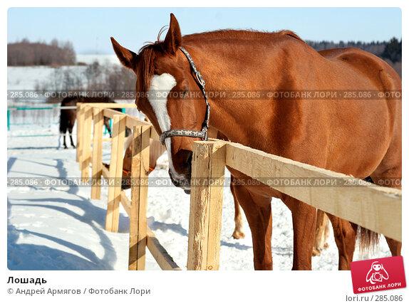 Лошадь, фото № 285086, снято 24 марта 2006 г. (c) Андрей Армягов / Фотобанк Лори