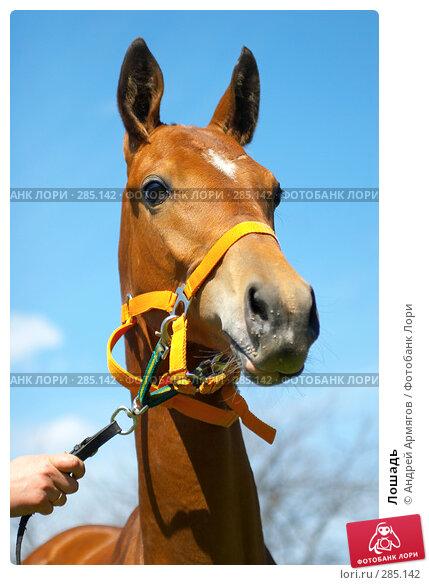 Купить «Лошадь», фото № 285142, снято 18 мая 2006 г. (c) Андрей Армягов / Фотобанк Лори