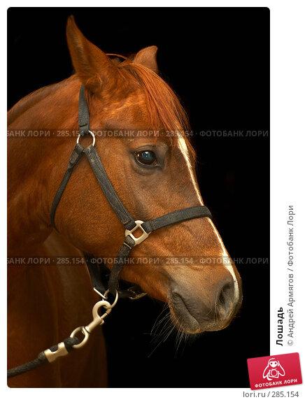 Купить «Лошадь», фото № 285154, снято 30 января 2007 г. (c) Андрей Армягов / Фотобанк Лори