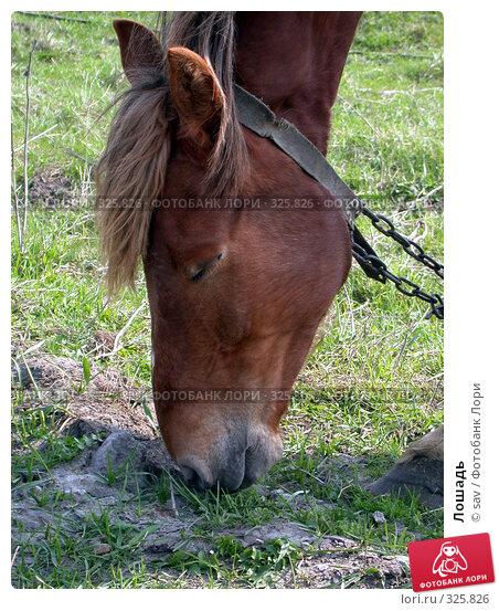 Купить «Лошадь», фото № 325826, снято 5 мая 2005 г. (c) sav / Фотобанк Лори