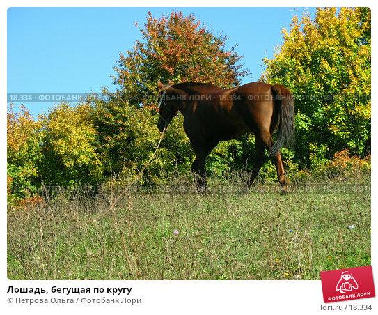 Лошадь, бегущая по кругу, фото № 18334, снято 28 сентября 2006 г. (c) Петрова Ольга / Фотобанк Лори