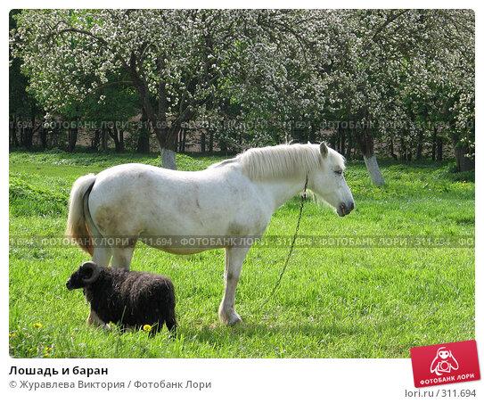 Купить «Лошадь и баран», фото № 311694, снято 22 ноября 2007 г. (c) Журавлева Виктория / Фотобанк Лори