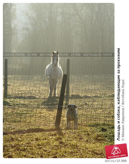 Лошадь и собака, наблюдающие за прохожим, фото № 21998, снято 1 февраля 2006 г. (c) Михаил Лавренов / Фотобанк Лори