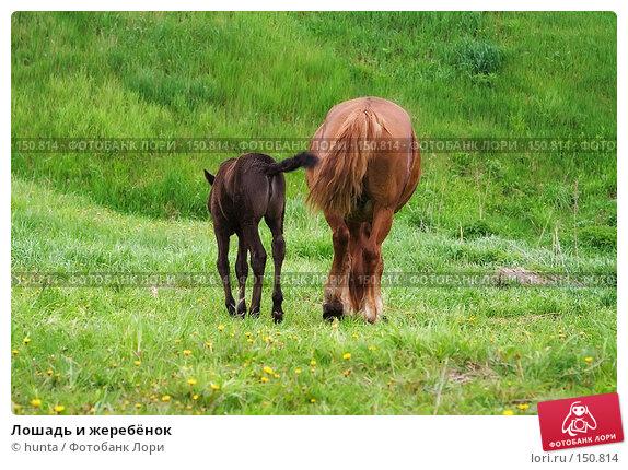 Купить «Лошадь и жеребёнок», фото № 150814, снято 19 мая 2007 г. (c) hunta / Фотобанк Лори