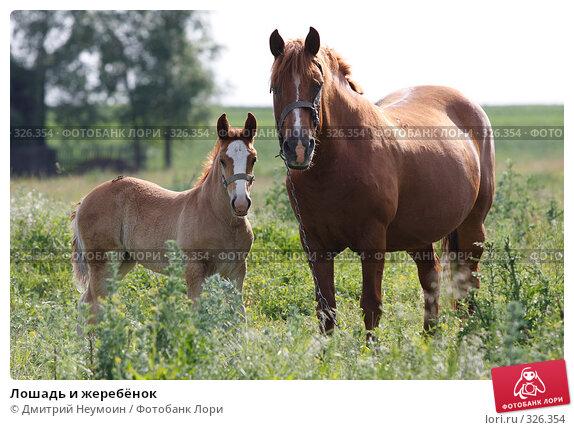 Лошадь и жеребёнок, эксклюзивное фото № 326354, снято 12 июня 2008 г. (c) Дмитрий Неумоин / Фотобанк Лори