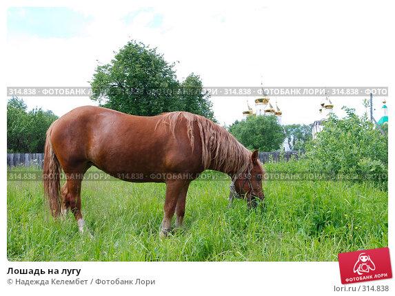 Лошадь на лугу, фото № 314838, снято 10 июня 2007 г. (c) Надежда Келембет / Фотобанк Лори