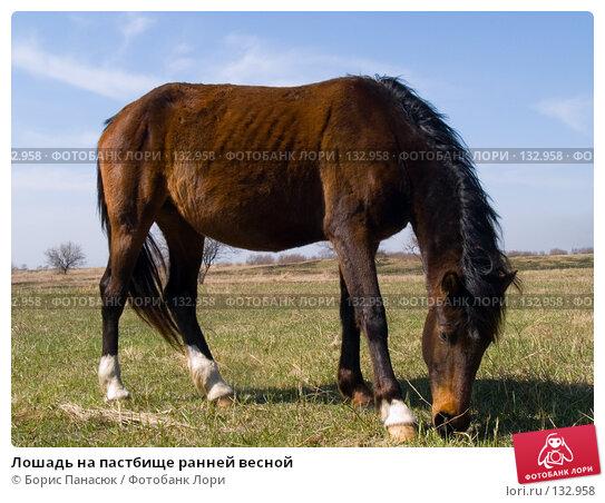 Лошадь на пастбище ранней весной, фото № 132958, снято 10 апреля 2005 г. (c) Борис Панасюк / Фотобанк Лори