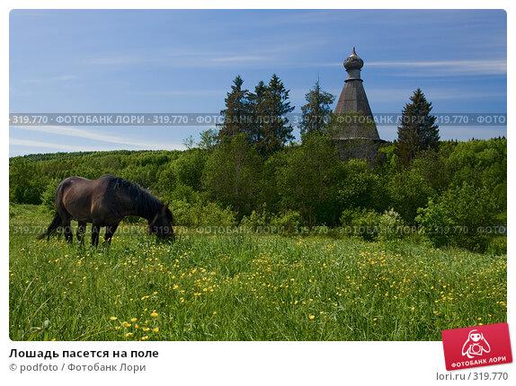 Лошадь пасется на поле, фото № 319770, снято 10 июня 2007 г. (c) podfoto / Фотобанк Лори