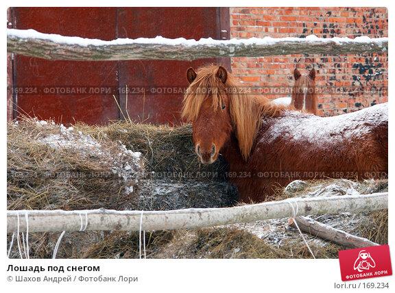 Купить «Лошадь под снегом», фото № 169234, снято 19 февраля 2007 г. (c) Шахов Андрей / Фотобанк Лори