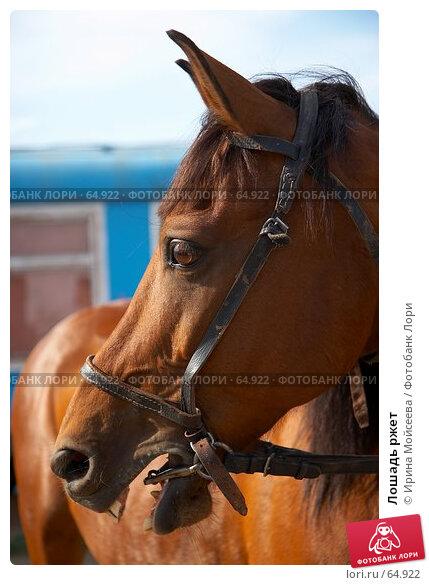 Лошадь ржет, эксклюзивное фото № 64922, снято 17 июня 2007 г. (c) Ирина Мойсеева / Фотобанк Лори
