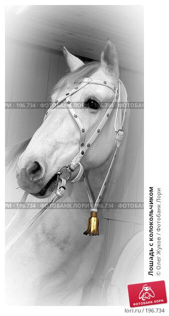 Лошадь с колокольчиком, фото № 196734, снято 9 декабря 2003 г. (c) Олег Жуков / Фотобанк Лори