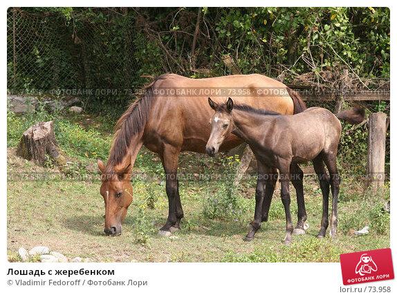 Лошадь с жеребенком, фото № 73958, снято 1 августа 2007 г. (c) Vladimir Fedoroff / Фотобанк Лори