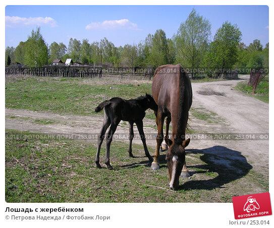 Купить «Лошадь с жеребёнком», фото № 253014, снято 19 мая 2006 г. (c) Петрова Надежда / Фотобанк Лори