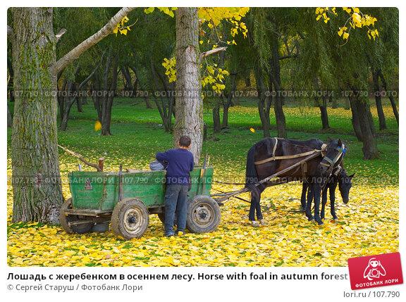 Лошадь с жеребенком в осеннем лесу. Horse with foal in autumn forest, фото № 107790, снято 28 октября 2007 г. (c) Сергей Старуш / Фотобанк Лори
