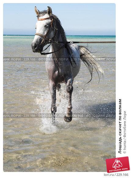 Лошадь скачет по волнам, фото № 229166, снято 16 сентября 2007 г. (c) hunta / Фотобанк Лори