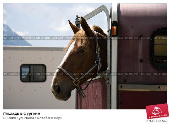 Лошадь в фургоне, фото № 63562, снято 10 июня 2007 г. (c) Юлия Кузнецова / Фотобанк Лори