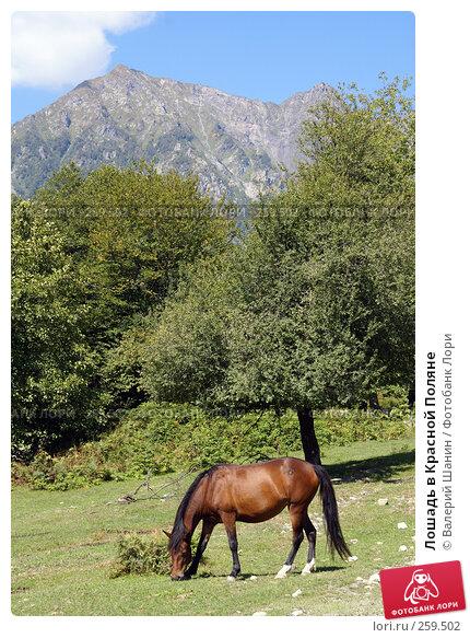 Лошадь в Красной Поляне, фото № 259502, снято 22 сентября 2007 г. (c) Валерий Шанин / Фотобанк Лори