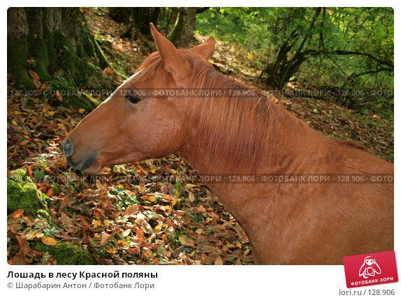 Лошадь в лесу Красной поляны, фото № 128906, снято 28 октября 2007 г. (c) Шарабарин Антон / Фотобанк Лори