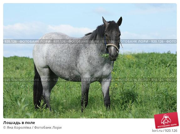 Купить «Лошадь в поле», фото № 920126, снято 14 июня 2009 г. (c) Яна Королёва / Фотобанк Лори
