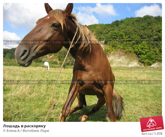 Лошадь в раскоряку, фото № 1978, снято 2 февраля 2003 г. (c) Елена А / Фотобанк Лори